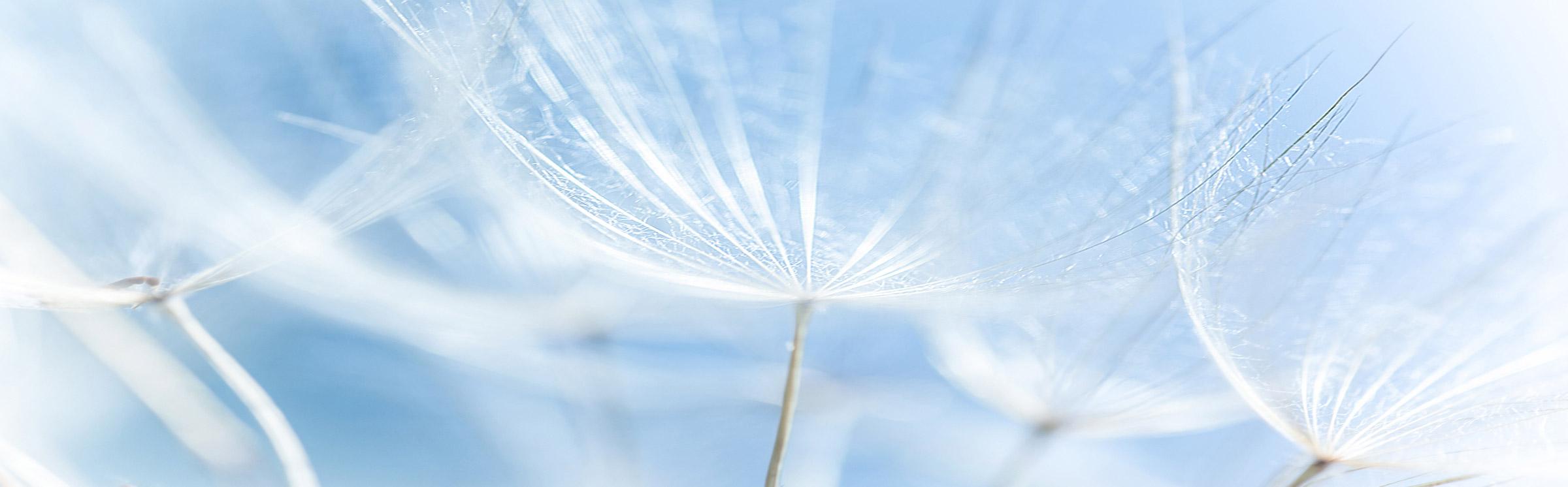 JOIN-dandelion2