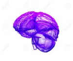 5 Fascinating  Brain Facts