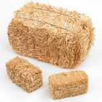 SEL Lesson: Needle In A Haystack