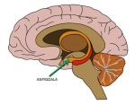 Amygdala Hijacking – and How to Prevent It